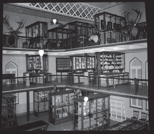 View of the display cases on two mezzanines overlooking the main floor at the Musée du Séminaire de Sherbrooke. Cervidae heads decorate the railings.
