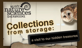 Collections from Storage: A Visit to our Hidden Treasures