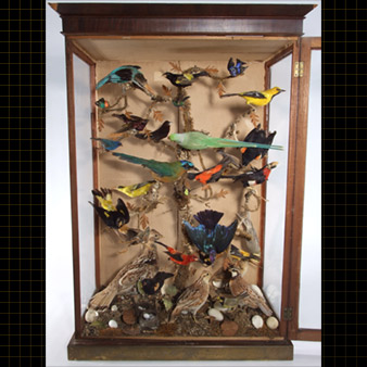 A display case that contains 35 birds.